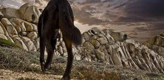 Sardinien, Capo Testa, Hund, Streifzug, Felsen